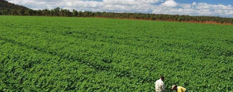 environmental project management newcastle hunter sydney